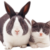catbunny-1.png